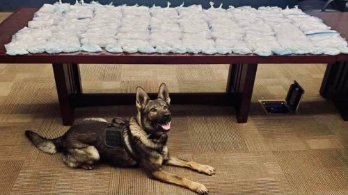 CHP dog helps sniff out 80 pounds of meth, fentanyl during Highway 99 traffic stop