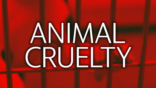 Federal grand jury indicts El Dorado County man accused of breeding dogs for fighting