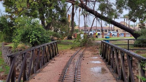Monsoon topples hundreds of trees in Arizona, photos show. Take a look
