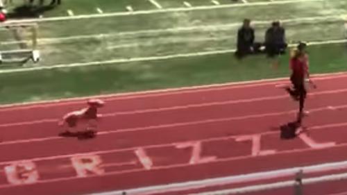 Watch loose dog win relay race at Utah high school track meet. 'Best anchor leg ever'