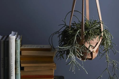 Low on natural light? These 6 indoor plants will thrive anyway