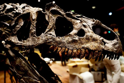 "Scientists just discovered a dinosaur so massive it is literally named ""one who causes fear"""