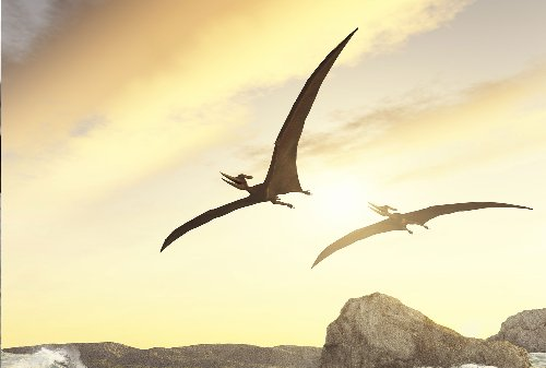 Bone scans reveal how the largest flying animal to ever live supported its weight