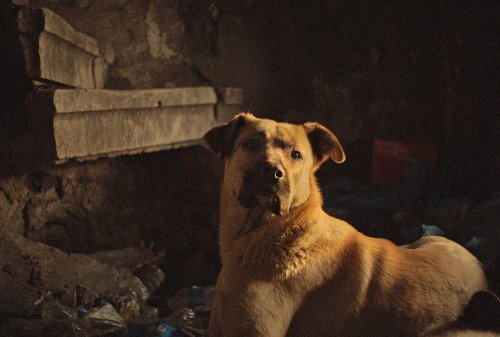 "In the documentary ""Stray,"" dogs are ""walking emblems of resistance against capitalism"""