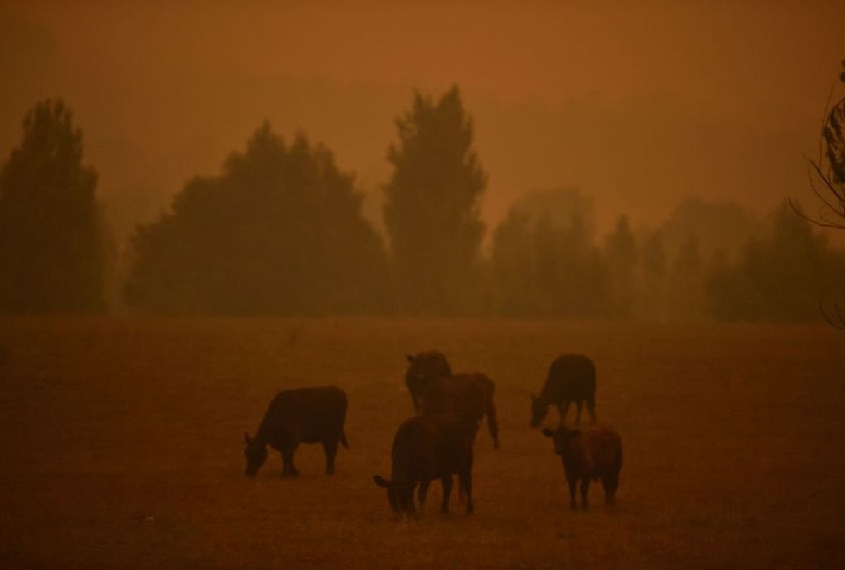 How wildfire smoke affects pets and other animals
