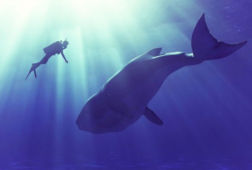 Could a human actually be engulfed by a whale? A marine biologist weighs in