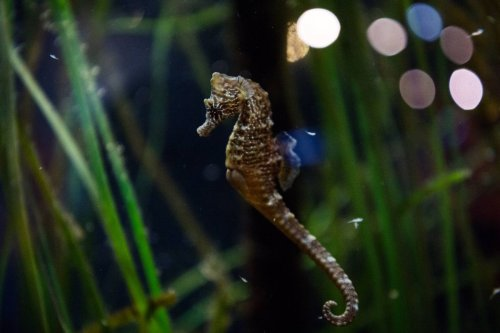 'Moms for Liberty' group demands schools stop exposing kids to 'sexy' pictures of seahorses