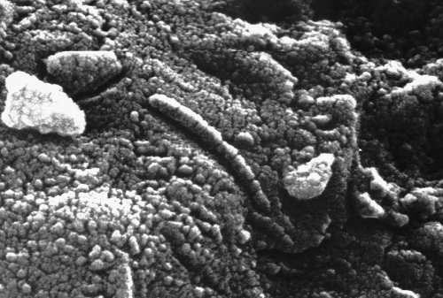 We may have found life on Mars 24 years ago