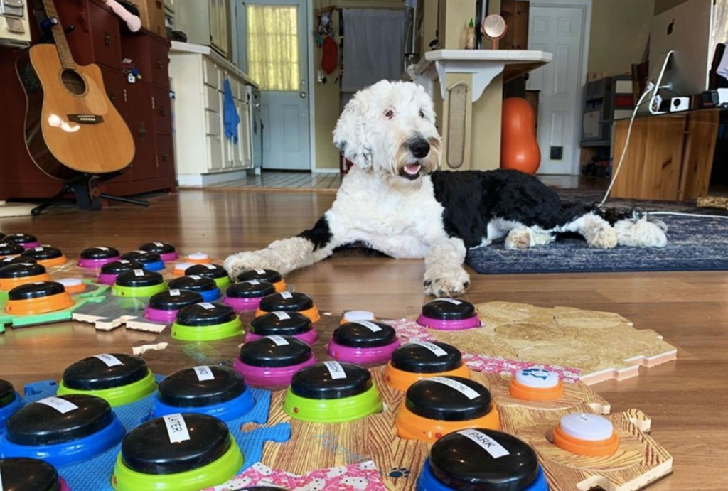 Dog Training - cover