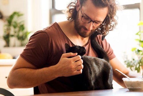 Does your cat love you? Here's what the science says