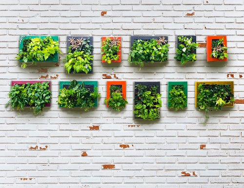 Got a wall? Turn it into a vertical garden