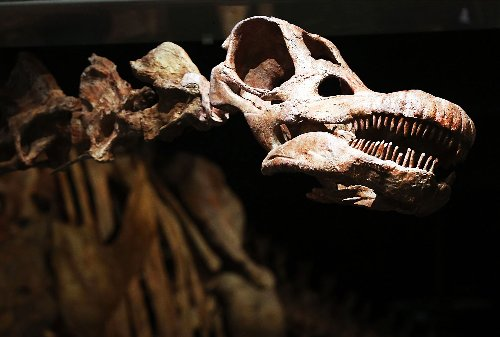 Our understanding of titanosaurs was just upended by a new discovery