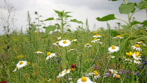 Am Samstag treffen sich in Büstedt die Blühpaten