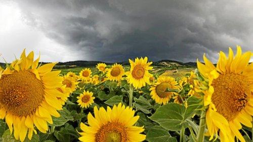 Wetterdienst warnt vor Gewittern bei Braunschweig und Salzgitter