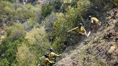 Large portion of Los Padres National Forest closes due to Willow Fire