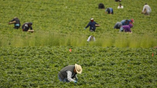 Here's how SLO County agriculture did in 2020 — one crop had its worst season in 5 years