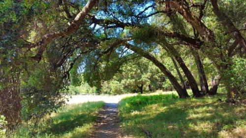 Quail Hollow: Santa Cruz Mountains Shangri-La
