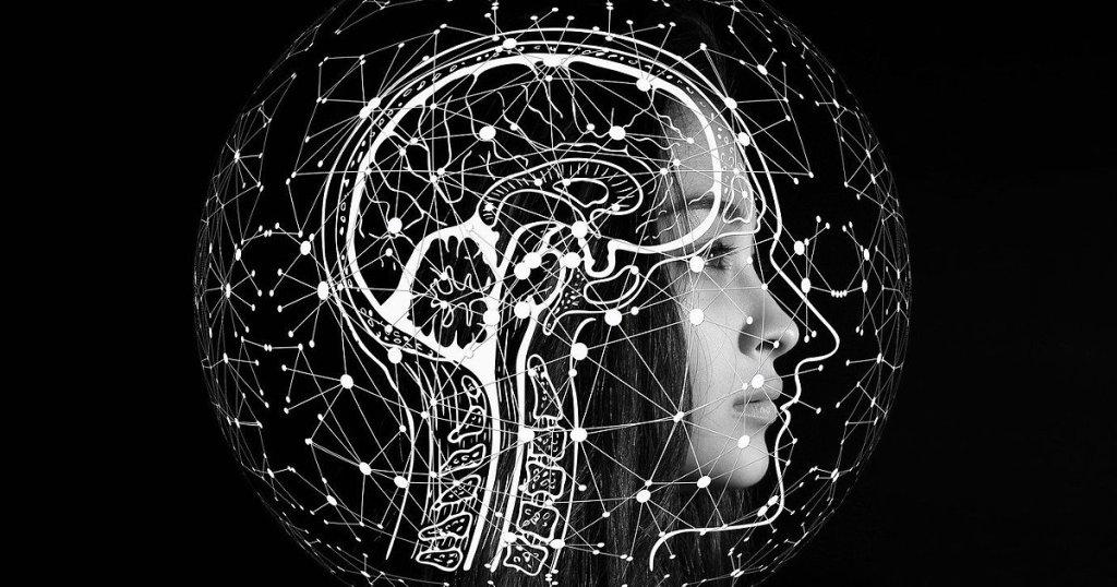 O cérebro humano- um órgão em exploração - cover
