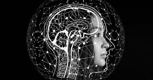 O cérebro humano- um órgão em exploração cover image