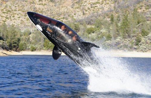 Personal Shark