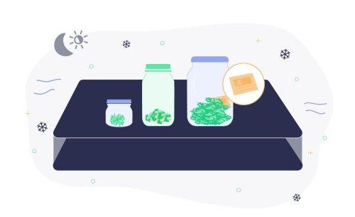 Tips for Keeping Marijuana Fresh: Storage and More