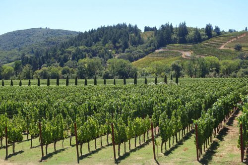 Best Napa Valley Wineries for Wine Tasting