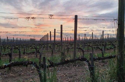 6 Must-Visit Wineries in Tokaj Hungary