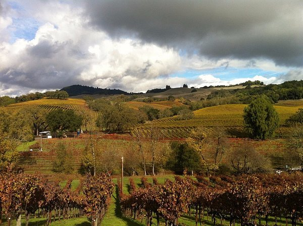 Where to Eat & Drink Wine in Healdsburg, California