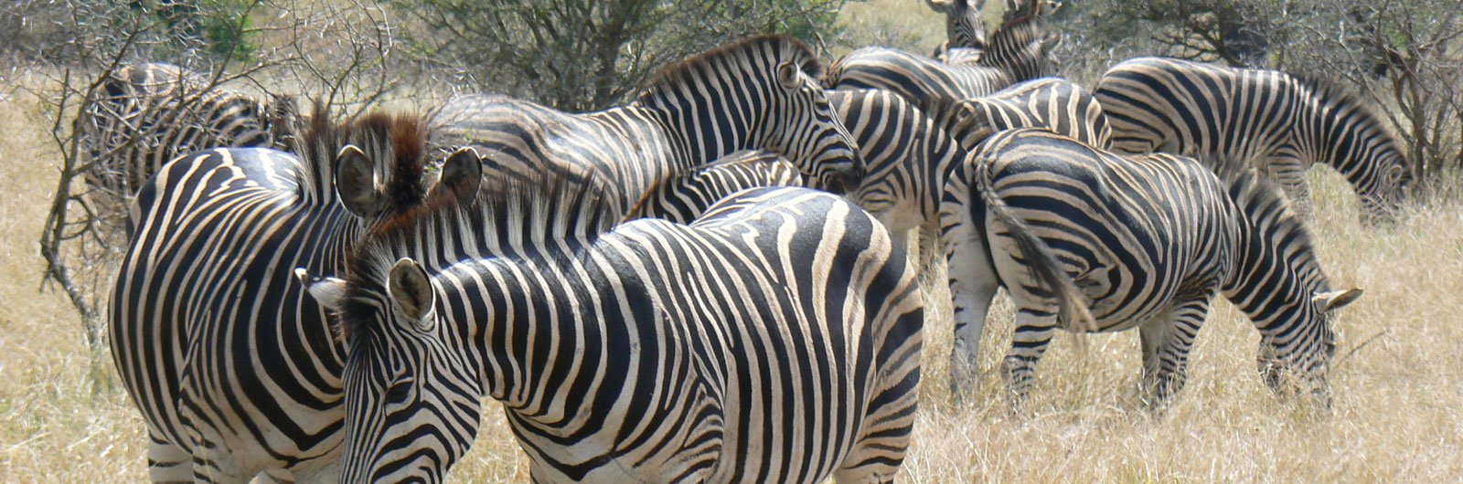 Want to See the Big 5? South Africa Safari Tips