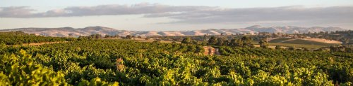 10-Day Road Trip to the Wineries of South Australia