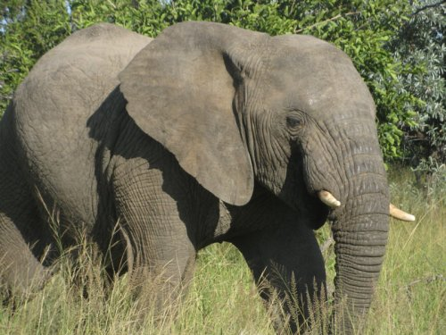 7 of the Top Elephant Safaris in Africa