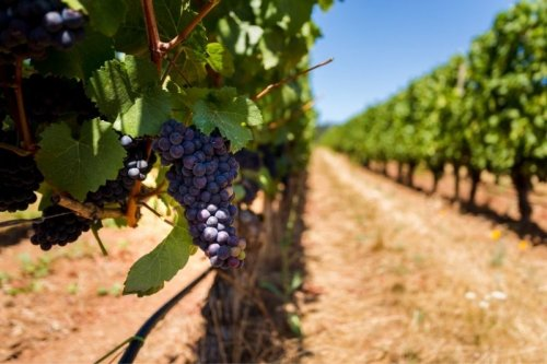 Willamette Valley Wineries: Where to Try Oregon Pinot Noir