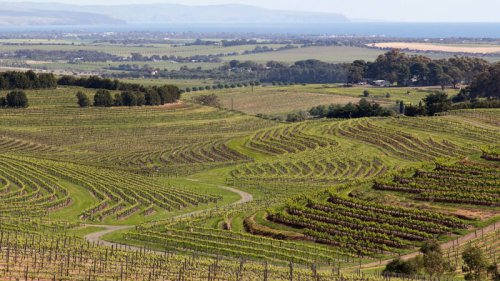 All You Need to Know about Australian Wine