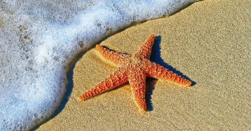 10 Starfish Coloring Pages That'll Make You Want To Explore The Ocean