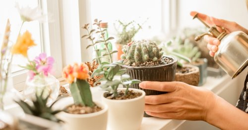 Pretty Fly For A Cacti! 10 Cactus And Succulent Coloring Pages That Look Sharp