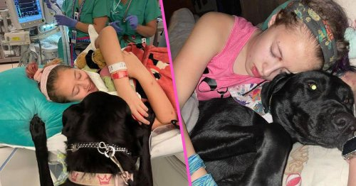 A Fellow Mom Cussed Out My Child About Her Service Dog––What You Should Know