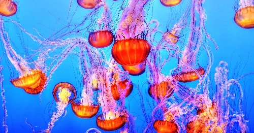 10 Electrifying Jellyfish Coloring Pages To Share With Your Little Sea Monsters