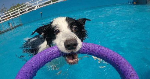 Dog Pool Toys Exists So Your Pupper Can Live Their Best Life This Summer
