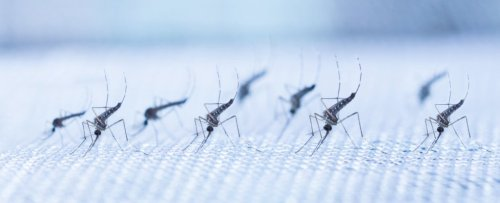 Dengue Fever Transmission Has Been Cut by an Incredible 77% in a Real-World Trial