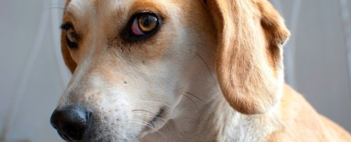 Your Dog Doesn't Trust You When You're Angry, Study Finds