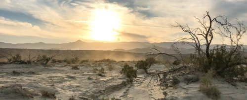 Plants Are Vanishing From California's Deserts, And 'Nothing's Replacing Them'