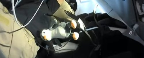 Meet Guin Guin, The Fluffy Penguin Toy Crew Member of The Recent SpaceX Launch