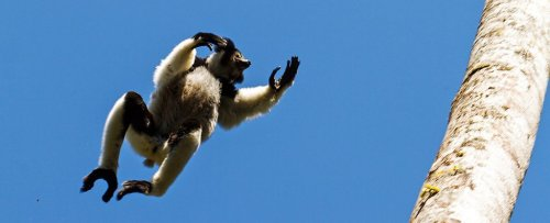 For The First Time, a Rhythm Universal to Humans Has Been Found in a Primate