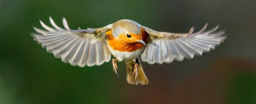 Birds Can See Earth's Magnetic Fields, And Now We Know How That's Possible