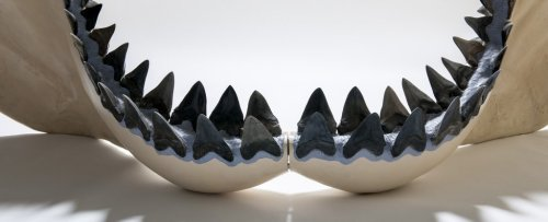 The Giant Megalodon Mega-Shark May Have Been Even Bigger Than We Thought