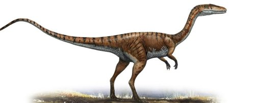 Fearsome Dinosaurs Like T. Rex Likely Waggled Their Tails While Running