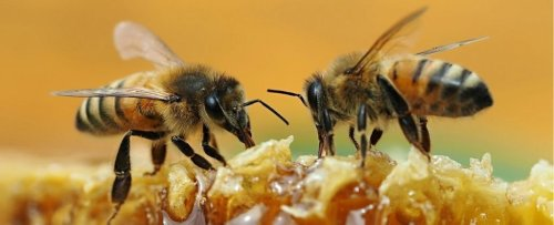 'Unbelievable' Video Shows Two Bees Work Together to Unscrew a Soda Bottle