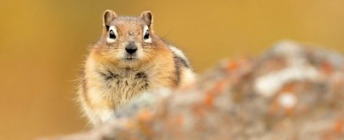 Ground Squirrels Have Four Specific Personalities That Shape Their Ecosystems