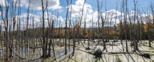 Ghost Tree 'Farts' Are a Silent Contributor to Greenhouse Gas Emissions