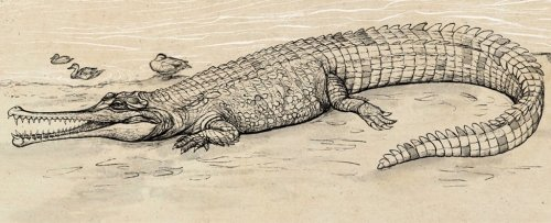 This Giant Prehistoric 'River Boss' Is Largest Extinct Croc Ever Found in Australia
